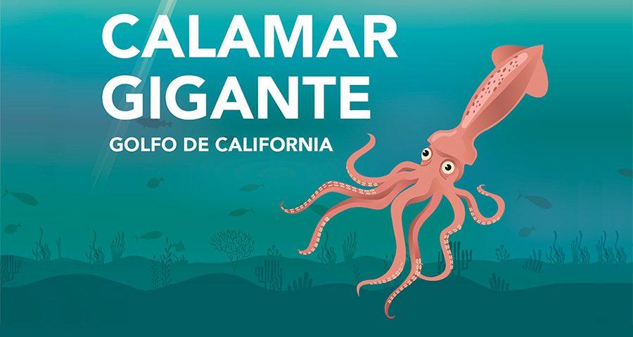 Resultado de imagen para imagen del calamar gigante